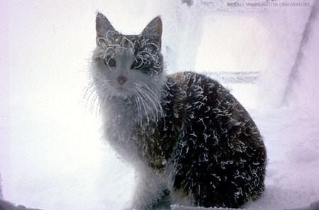 chat jacques
